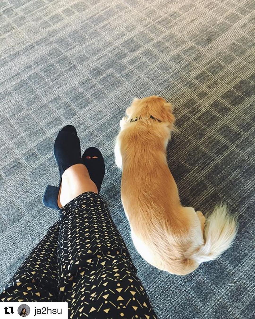 If only we could all lay down in meetings…#dogsoftroika #wednesday