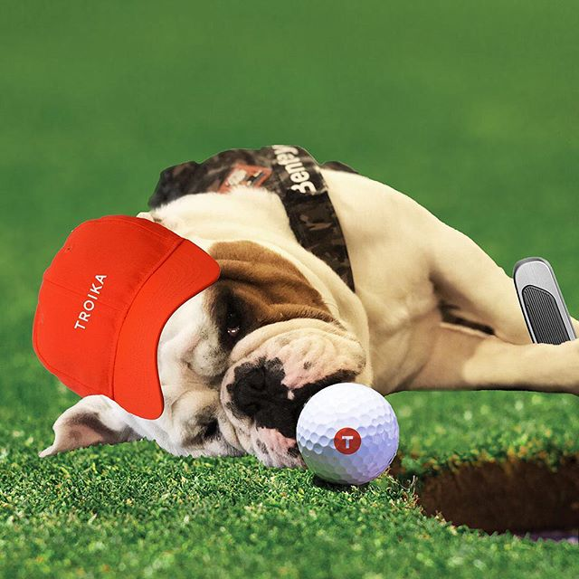 When you're dedicated to lining up that putt perfectly Our latest visitor, Bentley, shows us how it's done [a little photoshop fun by Troika designer @sam_swenor
